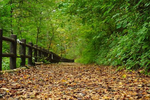 2018年10月8日(日)の檜原都民の森