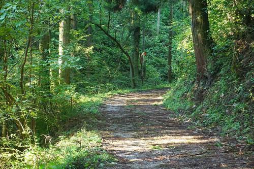 木下沢梅林の林道
