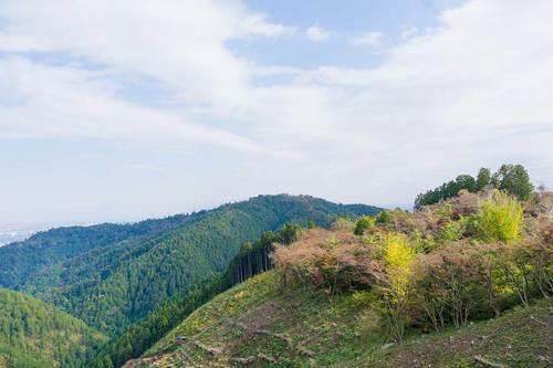 2018年11月3日(土) 高尾山の紅葉その1