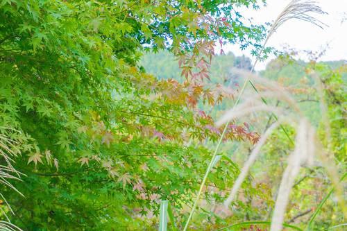 2018年11月3日(土) 高尾山の紅葉その2