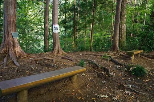 いろはの森コースのベンチ
