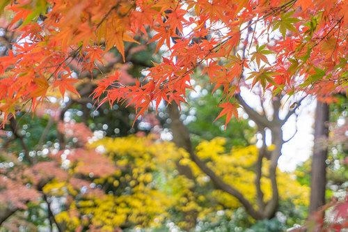 2018年12月9日 紅葉の旧古河庭園_2