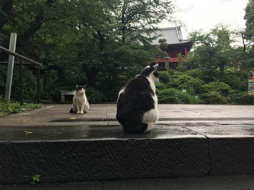 2019年6月28日上野公園の猫
