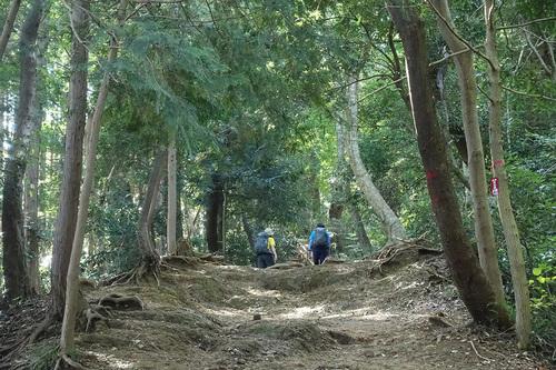高尾山稲荷山コース-山道の様子2