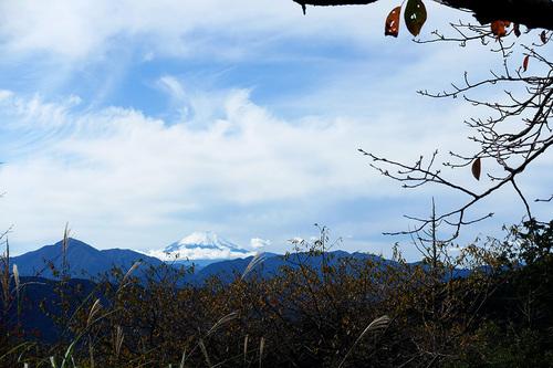高尾山もみじ台付近の桜の名所から富士山を望む