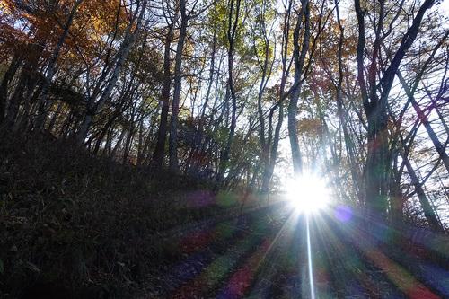 RX100IIIで撮影した朝陽が射し込む森 JPG撮って出し