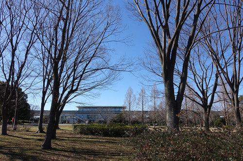 舎人公園の写真1