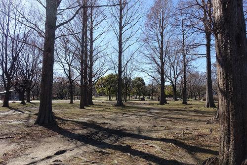 舎人公園の写真2