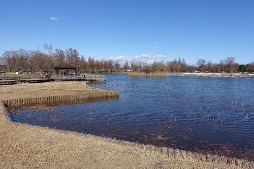 舎人公園の写真3