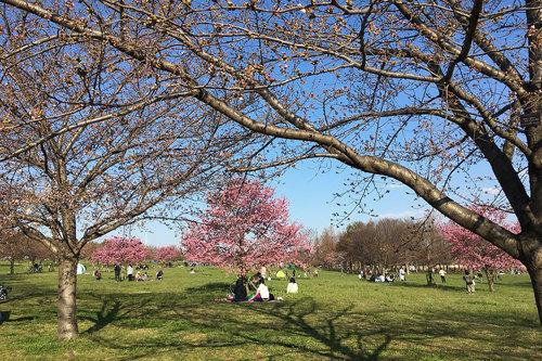 舎人公園の写真5