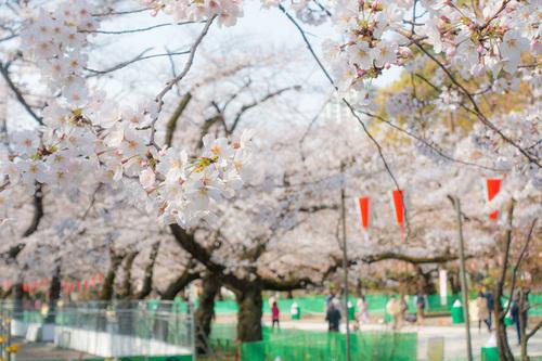 上野公園2020年3月22日の桜 その5