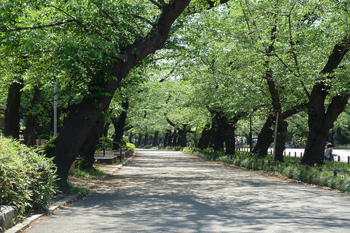 STAY HOME週間の上野公園さくら通り