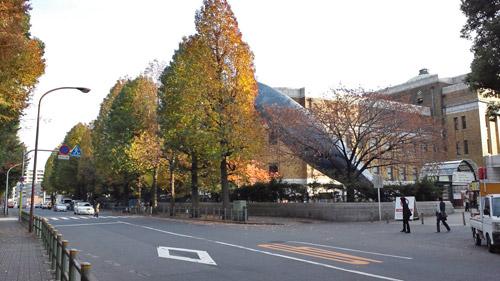 11月25日、上野公園