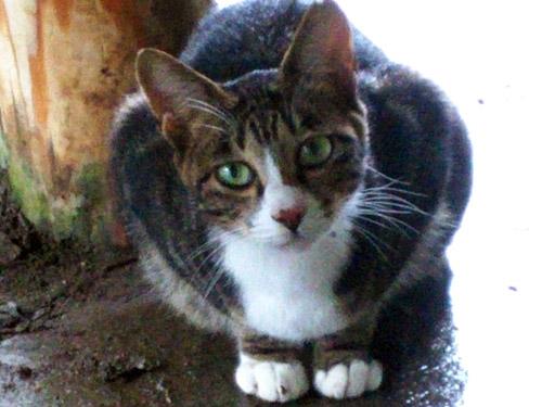 高尾山の猫