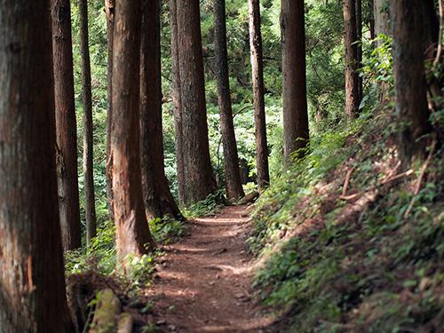 行程の多くの時間を占める一般的な登山道例