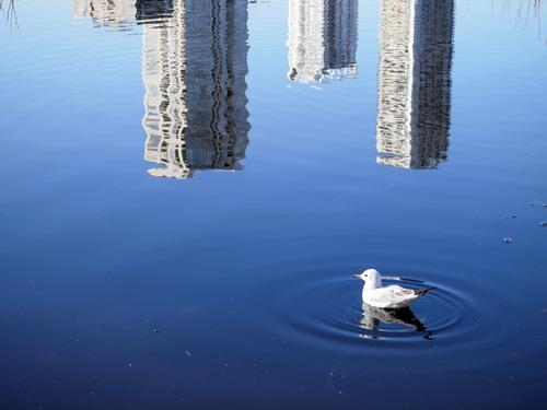 不忍池と鳥